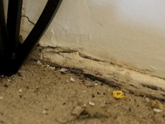 Mice droppings are seen near a hole in the corner of the living room in a flat owned by Jared Kushner. Picture: AP Photo/Julio Cortez