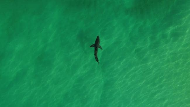 shark attack byron bay - photo #12