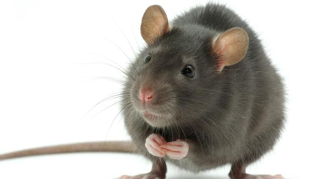 "Pest control is a ""grey zone"" so landlords are encouraged to get on the front foot. Copyright: Thinkstock."