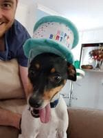 Having a mad birthday. Lee Evans, Cooper (mini fox terrier) Picture: Jacinta Evans