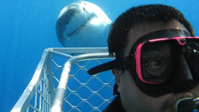 A Great White appears to grin for a selfie taken by a diver in Port Lincoln, South Australia. Picture: CALYPSO STAR CHARTERS / MEDIADRUMWORLD.COM