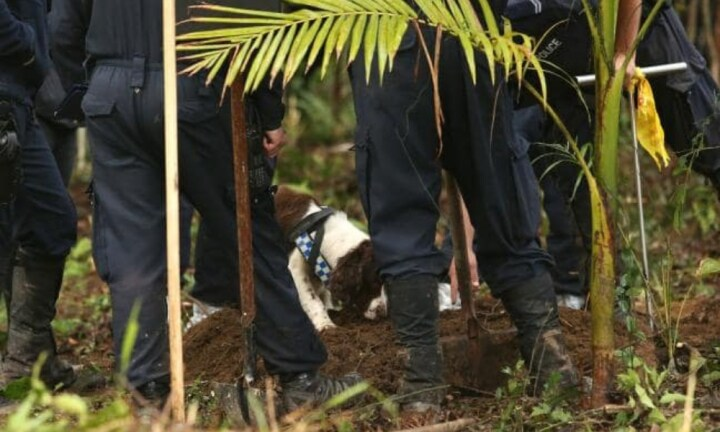 Police dog handler describes 'impossible' search for William Tyrrell