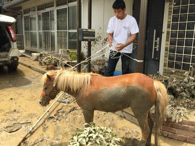 Leaf after she was rescued from a roof top three days after having been swept away in floodwaters. The horse was found caked in mud with a minor injury to one leg. Picture: Courtesy of Peace Winds Japan