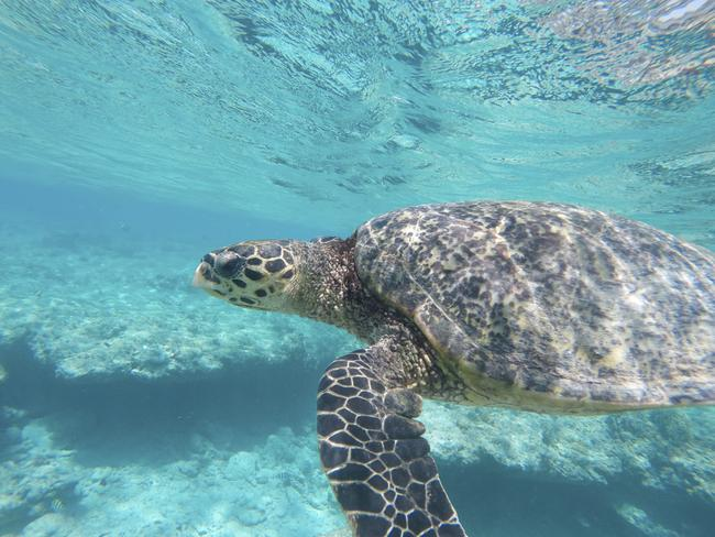 The region is known for its turtles. Picture: iStock