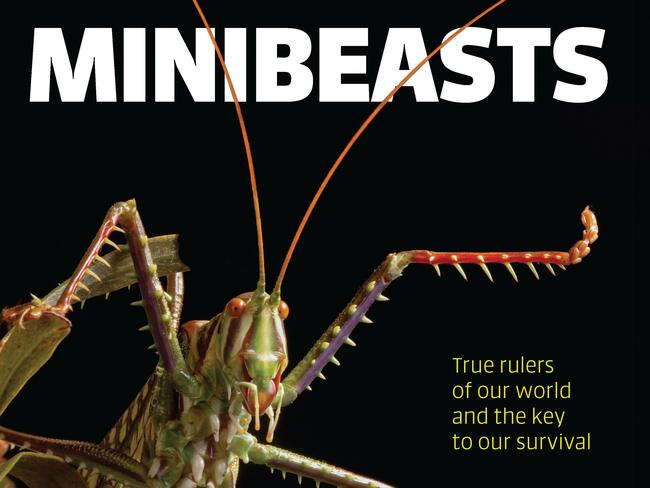 The cover of the book, Minibeasts by Alan Henderson. Picture: Minibeasts/Alan Henderson