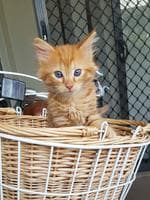 Peaches. Picture: Nakita Clancy. Cutest cats in Pine Rivers.