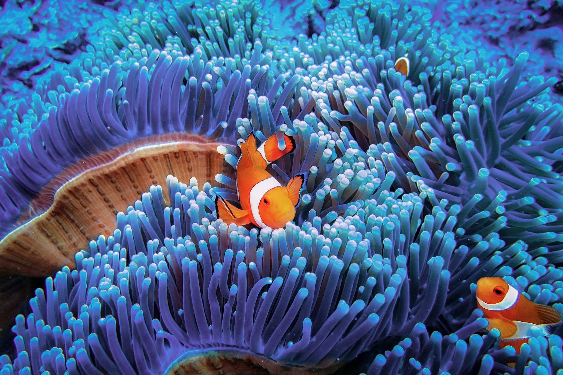 ideas creativas de sesión de fotos bajo el agua