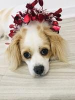 """Daisy: """"Why does Mummy make me wear this stuff?"""" Picture: Aims Couzner"""