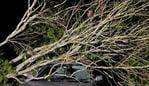 Nambour SES sent in this picture of a fallen tree over a car following the storm on Wednesday night.