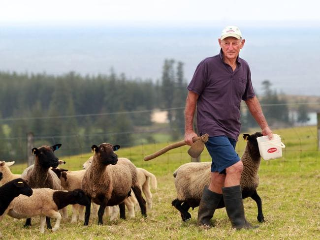 Sheep farmer Ron Nobbs on his Norfolk Island property.