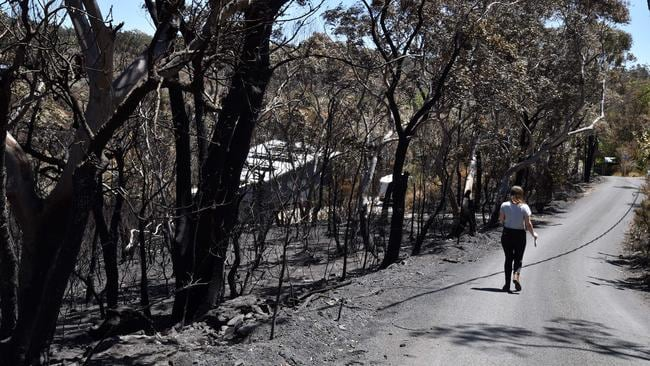 A woman walks past charred trees at the Woodford residential area after a bushfire in Blue Mountains on Tuesday. Picture: AFP/Saeed Khan