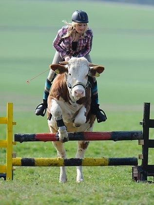 It took Regina six months to train Luna but the teen says her unusual ride is still quite headstrong / AP