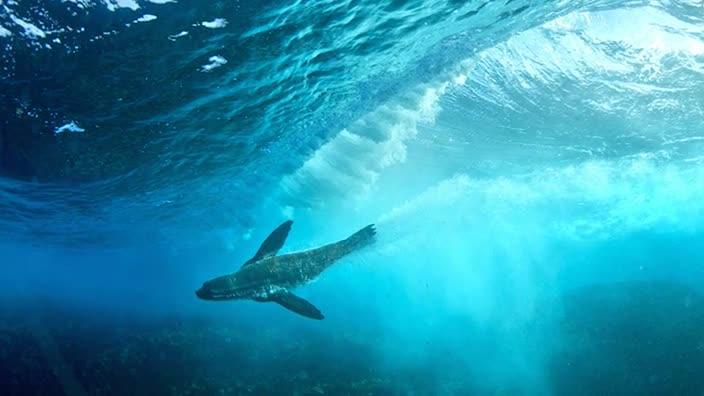 Former Marine Biologist Turned National Geographic Photographer Thomas Peschak Is In Sydney To Discuss How He Shoots Underwater Photos