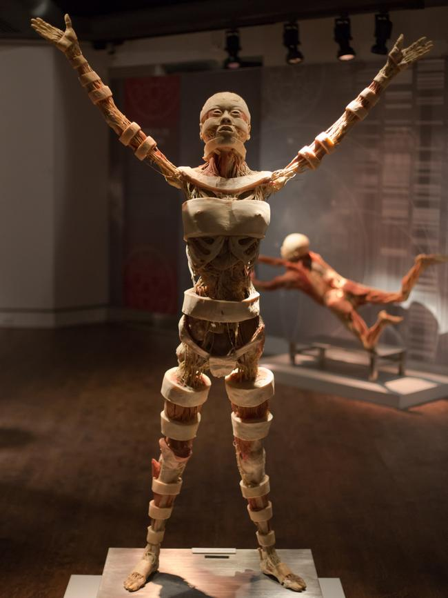 Extraordinary Real Bodies Exhibition Comes To Sydney Daily Telegraph