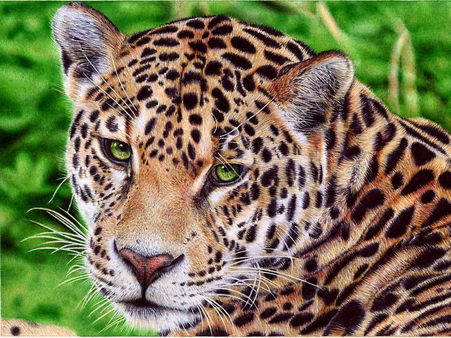 Jaguar - Ballpoint Pen by VianaArts. The artist cleans his pen tip once a minute, so over the 15 hours it took to complete this image he cleaned it at least 900 times.