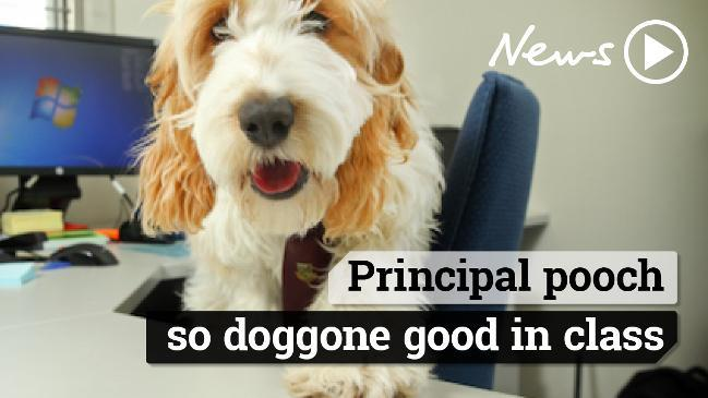 Principal pooch, so doggone good in class