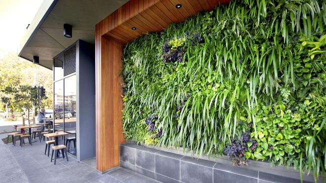 Green wall by PLantUp at Vine Apartments.
