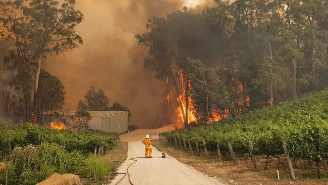 A CFS volunteer with a koala by their side as fire rages through the Adelaide Hills. Photo: Eden Hills CFS / Facebook.