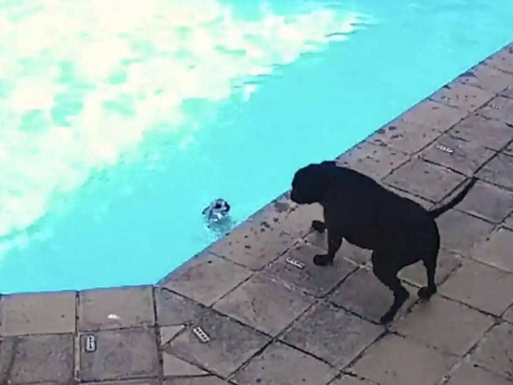 El perro tardó 34 minutos en rescatar a su amigo canino.