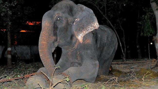 The tears rolling down Raju's face. Credit: Press People/Wildlife SOS