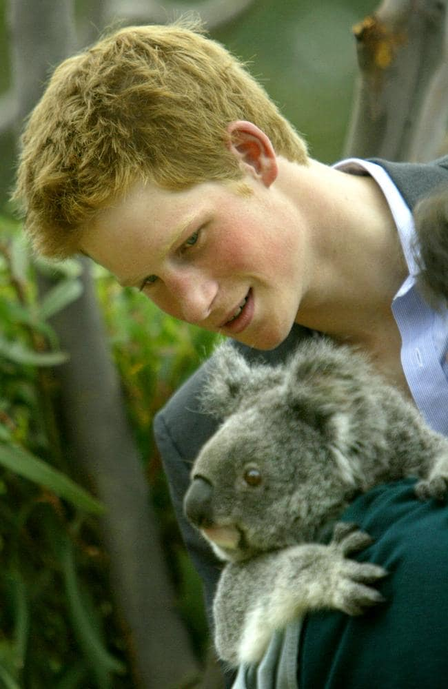 Koala numbers in New South Wales have plunged by 32 per cent since Prince Harry met this koala in 2003.