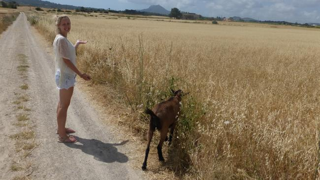 An unusual holiday activity — Stephanie walking a goat in Spain.