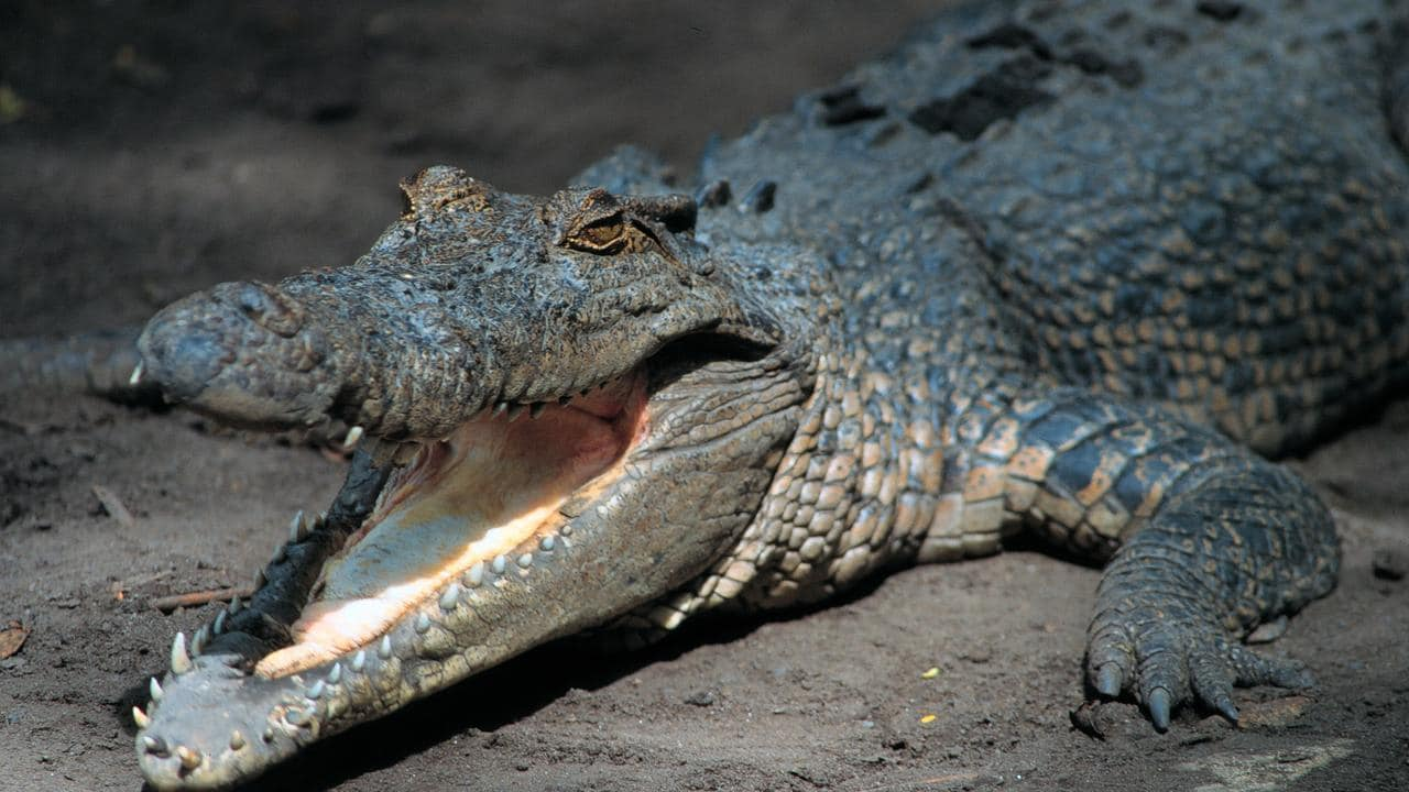 Second crocodile captured and euthanised after death of fisherman Andy Heard
