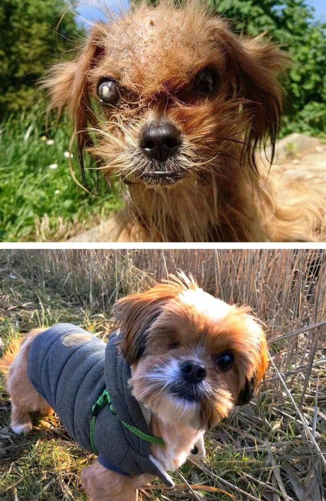 "Before and after: Frodo's ""before and after"" transformation shared by his new owner. Picture: Reddit/@markodus"