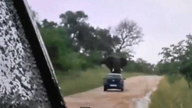 Moments before the elephant rolls the tourists' car in Kruger National Park.