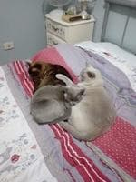Shawnee, Karlee & Kiza, time for bed. Picture: Diane G Gilbert. Cutest cats in Redcliffe.