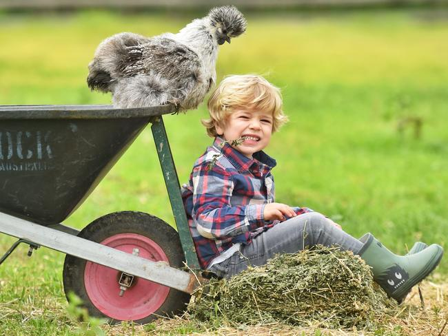 Charlie, 4, pictured with a silkie chicken, is looking forward to this year's Royal Melbourne Show. Picture: Tony Gough