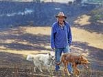 Local resident and farm hand, Tex Sonners with dogs Macka 6 months and Cindy, 1 on a property along Elderslie Road, Pelham where he had to evacuate live stock as it was affected by the fires yesterday. Picture: Zak Simmonds