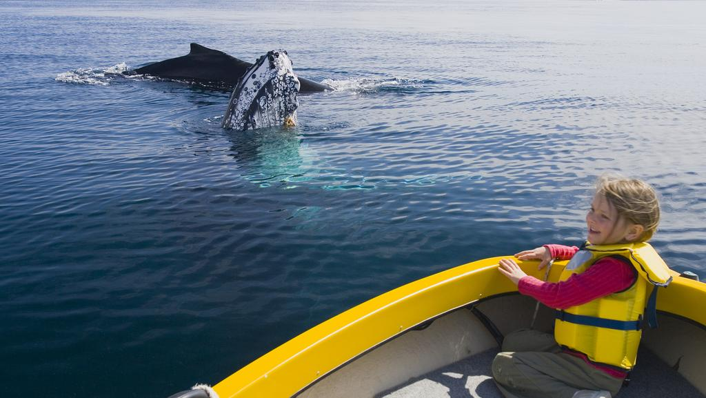 Reasons To Visit New South Wales Sapphire Coast