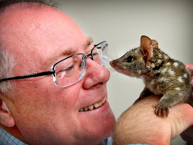 """Environment Minister Ian Hunter with 4 month old quoll """"Tucker"""" at the Adelaide Zoo last year."""