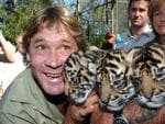 Steve Irwin with three purebred Sumatran Tiger Cubs in Sydney in 2004.