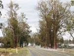 Trees stripped and debris across the roads in the Mary Valley. Photo Lachie Millard