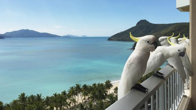 Hamilton Island Resort has benefited from hundreds of millions of dollars of investment.