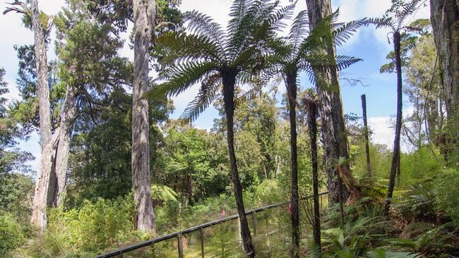 Regenerating native forest and ancient Rimu at Dancing Star Reserve. Picture: Sothebys