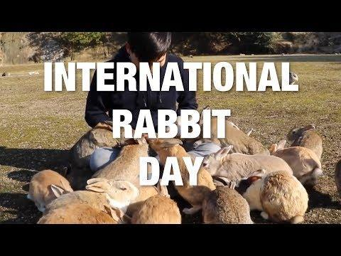 International Rabbit Day - The Ultimate Cute Bunny Compilation. Credit - Various via Storyful