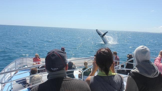 If you like whale watching, check out this tour in Hervey Bay.