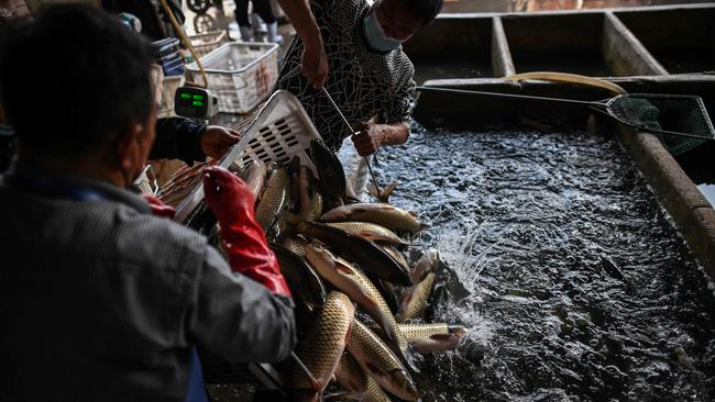 Workers unload fish from a truck at a shop at the Wuhan Baishazhou Market in Wuhan in China's central Hubei province. Picture: AFP