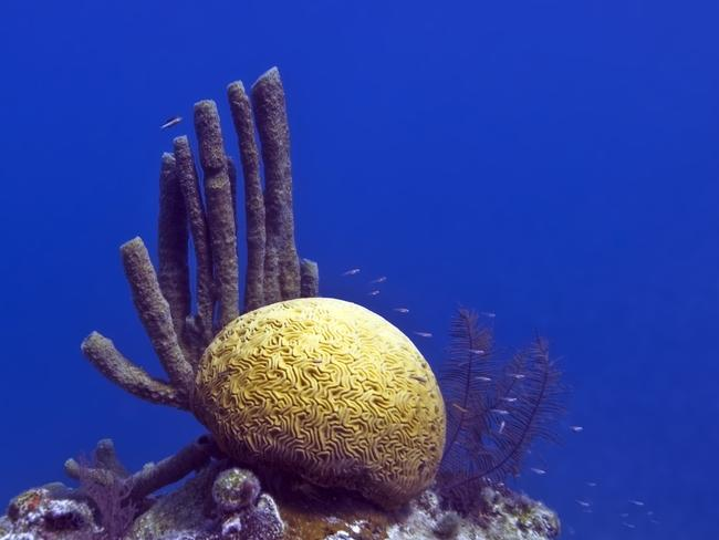 The corals of the Blue Hole. Picture: Jayhem