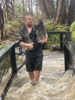 The Australian Reptile Park was hit by flash flooding on Friday. Picture: AAP/Supplied