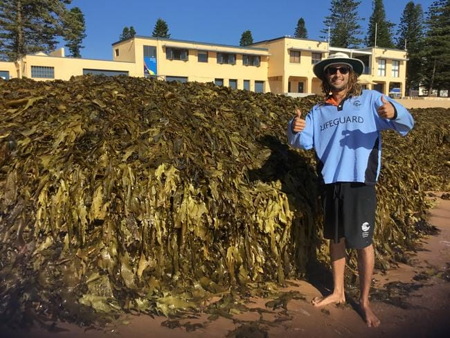 Northern Beaches Council lifeguard Liam Arms with a mountain of seaweed that has forced the closure of Collaroy Beach.