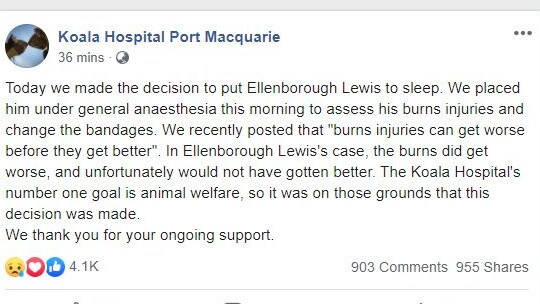 Picture: Facebook/Koala Hospital Port Macquarie