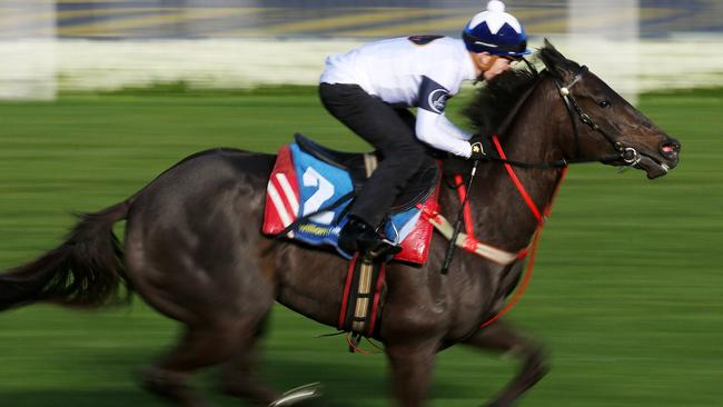 Breakfast with the Best gallops at Moonee Valley. Yankee Rose. Pic: Michael Klein