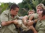 Steve Irwin and his team doing what they do best.