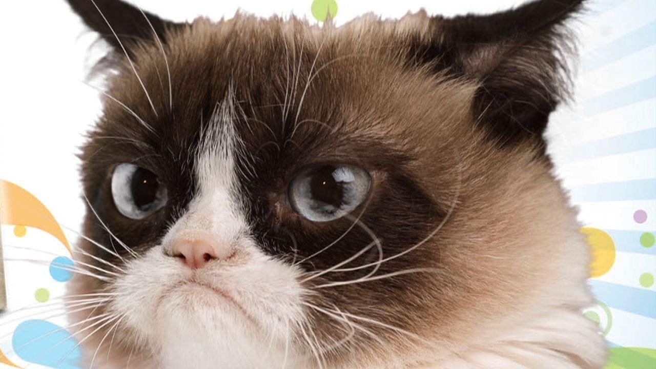 Happy 2nd Birthday, Grumpy Cat!
