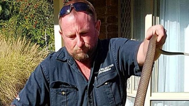 Tony Harrison with a 1.7m eastern brown snake at an Ormeau property. Photo: Gold Coast and Brisbane Snake Catchers.
