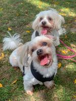 Danielle Kettles' girls Holly and Bailey. Puppy Power List. PRP